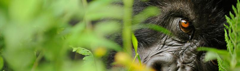 IPV banner / ©: WWF