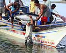 Pesca de Atún en Filipinas