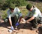 Jordi Pont y Anna Servent, agentes de la patrulla del Grupo de investigación en furtivismo y veneno de Lleida de los agentes rurales de la Generalitat, examinando pruebas sobre el terreno.