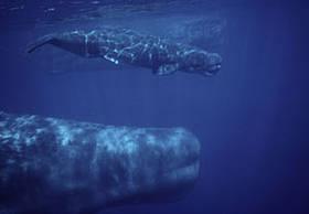 CBI 2010 / ©: WWF