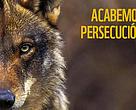 Acabemos con la persecución del lobo