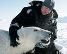 Magnus Andersen, del Instituto Polar Noruego, examinando a un oso polar en Svalbard.