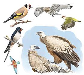/ ©: Guía de Aves del Refugio de Montejo de la Vega