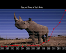 Aumento de la caza ilegal de rinocerontes.