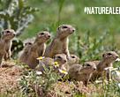 Revive tu naturaleza #NatureAlert