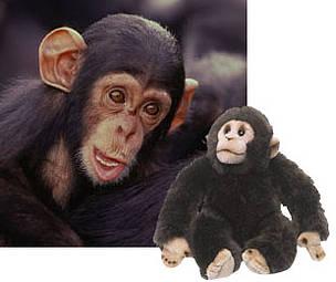 Chimpancé / ©: WWF