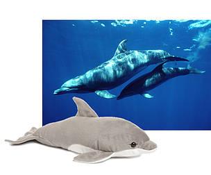 Adopta un delfín / ©: WWF/Carlos Suárez