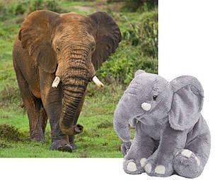 Elefante / ©: WWF