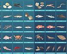La guía de consumo responsable de pescado de WWF incluye información sobre casi 100 especies