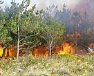 Incendio forestal en Galicia en el verano de 2006