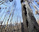 bosques, incendios, incendio forestal, galicia