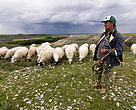 Pastor de ovejas en Montejo de la Vega de la Serrezuela (Segovia), cerca del Refugio de rapaces de Montejo
