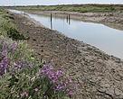 La marisma de las Aletas, un espacio de gran valor ecológico en la costa gaditana salvado del hormigón