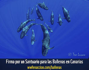 Un Santuario para las ballenas