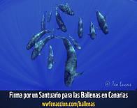 Un Santuario para las ballenas / ©: WWF