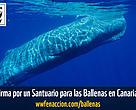 Por un Santuario para las ballenas
