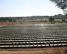 Nuevos cultivos de arándanos en el entorno de Doñana en una finca anteriormente de secano, transformada de forma presuntamente ilegal al regadío.