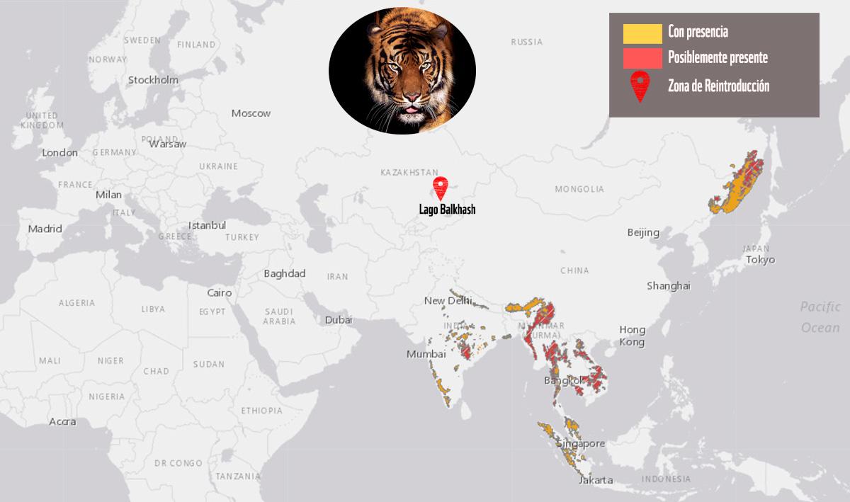 Los tigres salvajes volvern a rugir en Kazajistn tras 70 aos de