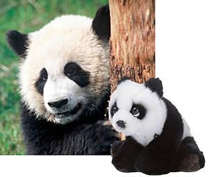 Panda / ©: WWF