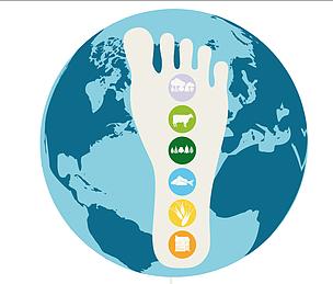 Informe Planeta Vivo / ©: WWF