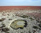 """Un """"ojo"""" de la marisma, la fuente natural por la que fluye agua dulce, prácticamente seco en el corazón de Doñana, a finales de 2016. Las inmensas marismas de Doñana llevan años prácticamente secas."""