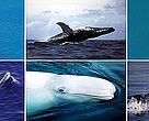 Ballenas del mundo