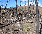 bosque quemado y regeneración